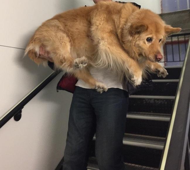 Собаки13