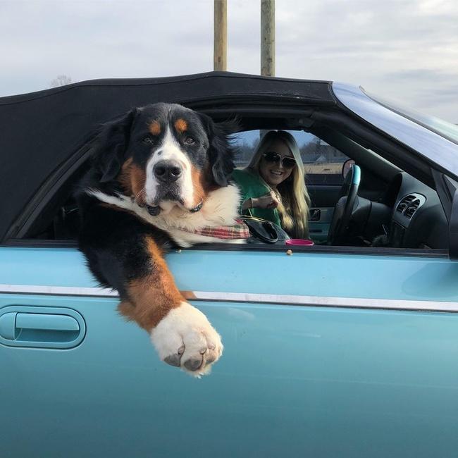 Собаки17