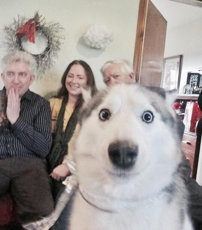 Собаки5