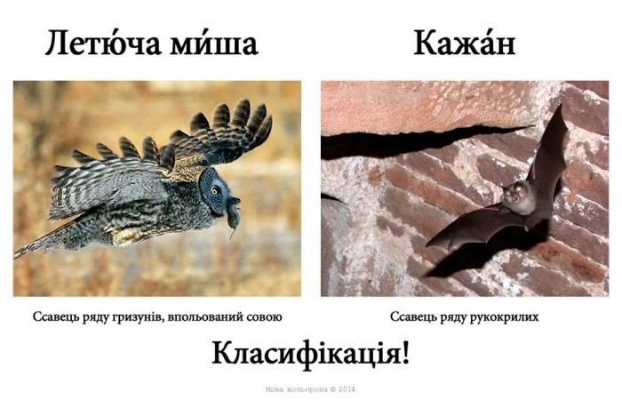 Русизми14