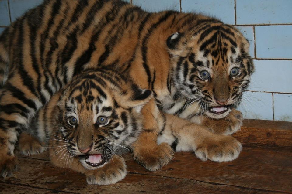 Николаевский зоопарк1