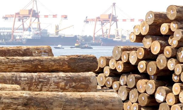 Свои леса защищают, украинские требуют вырубать