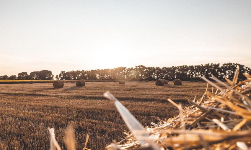 Рынок земли в Украине: количество сделок по купле-продаже угодий больше 6,5 тысяч